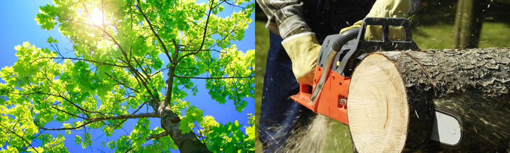 Tree Services Warrenville